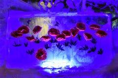 Rode die papavers en vlinders in ijs worden bevroren stock fotografie