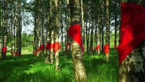 Rode die pioniersbanden bij berk worden gebonden 4K stock footage