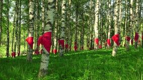 Rode die pioniersbanden bij berk worden gebonden 4K stock videobeelden