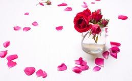 Rode die rozen door de vage bloemblaadjes worden omringd Royalty-vrije Stock Foto's