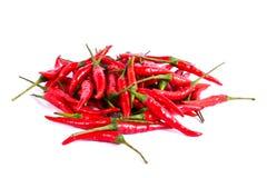 Rode die Spaanse peper of Spaanse peperscayennepeper op witte achtergrond wordt geïsoleerd Stock Foto