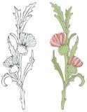 Rode Distel Vector Illustratie