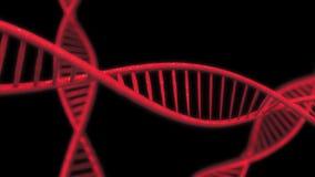 Rode DNA-Bundel langzame motie - 3D Animatie Geanimeerde DNA-ketting royalty-vrije illustratie
