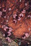 Rode droge bloemen op zand gound Royalty-vrije Stock Afbeelding