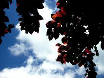 Rode Droom Stock Fotografie