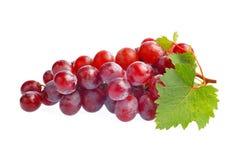 Rode druif met blad dat op witte achtergrond wordt geïsoleerde Royalty-vrije Stock Afbeelding