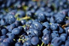 Rode druiven in het krat Royalty-vrije Stock Fotografie