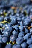 Rode druiven in het krat Stock Afbeelding