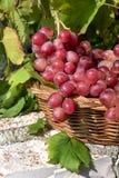 Rode druiven in mand, royalty-vrije stock fotografie