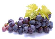 Rode druiven met bladeren op witte achtergrond Royalty-vrije Stock Foto's