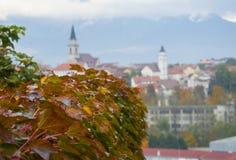 Rode druivenbladeren met panoramamening van Kranj, Slovenië Royalty-vrije Stock Fotografie