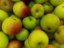 Rode echte appelen Royalty-vrije Stock Afbeeldingen