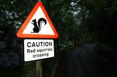Rode Eekhoorn Royalty-vrije Stock Foto