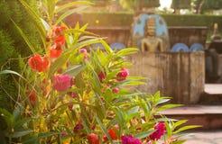 Rode eerlijke bloemen en Boedha op achtergrond Royalty-vrije Stock Afbeelding
