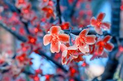 Rode electro - bloem. Royalty-vrije Stock Foto's