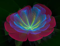 Rode en blauwe bloem royalty-vrije stock fotografie