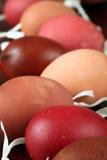 Rode en bruine Paaseishells Stock Afbeelding