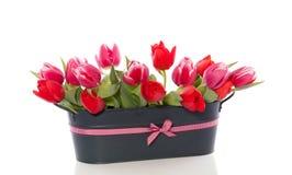 Rode en donkere roze tulpenbloemen Stock Afbeelding