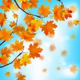 Rode en gele bladeren tegen blauwe hemel. EPS 8 Royalty-vrije Stock Foto