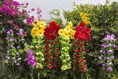 Rode en gele bloemen Stock Afbeeldingen