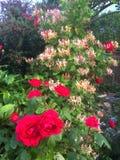 Rode en gele bloemen in een tuin Royalty-vrije Stock Foto's