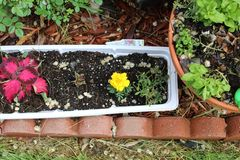 Rode en gele bloemplanter stock afbeelding