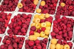 Rode en gele frambozen in dozen bij lokale landbouwbedrijfmarkt Royalty-vrije Stock Afbeeldingen