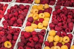 Rode en gele frambozen in dozen bij lokale landbouwbedrijfmarkt Stock Afbeeldingen