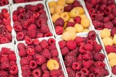 Rode en gele frambozen in dozen bij lokale landbouwbedrijfmarkt Royalty-vrije Stock Foto's