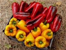 Rode en gele peper Stock Afbeelding