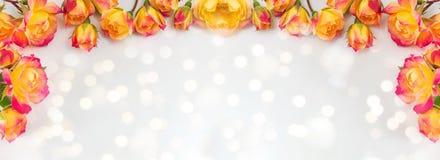 Rode en gele rozen brede banner stock fotografie