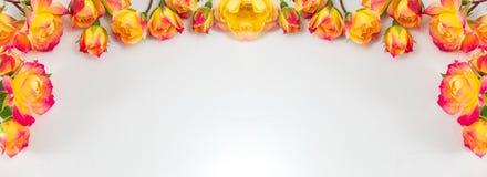 Rode en gele rozen brede banner royalty-vrije stock foto