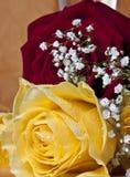 Rode en gele rozen op witte achtergrond royalty-vrije stock afbeelding