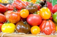 Rode en gele tomaten Stock Foto's