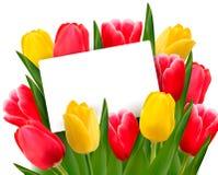 Rode en gele tulpen en spatie van kaart. vector illustratie