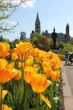 Rode en gele tulpenbloemen in een tuin met het Parlement op achtergrond Royalty-vrije Stock Foto's