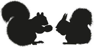 Rode en grijze eekhoorns vector illustratie