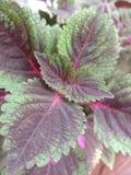 rode en groene bloem royalty-vrije stock foto's