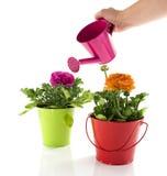 Rode en groene emmer met de lentebloemen royalty-vrije stock afbeelding