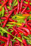 Rode en groene Spaanse peperpeper Stock Fotografie