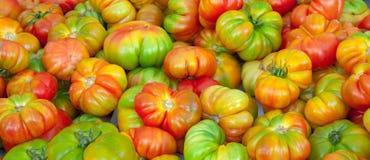 Rode en groene tomaten royalty-vrije stock foto's