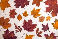 Rode en oranje esdoornbladeren stock fotografie