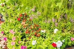Rode en oranje Spaanse peperpeper en multicolored bloem Stock Foto