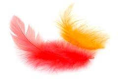 Rode en oranje veren stock afbeelding