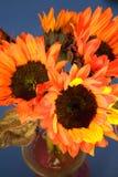 Rode en Oranje Zonnebloemen Royalty-vrije Stock Fotografie