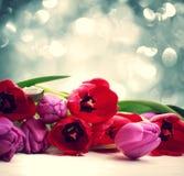 Rode en purpere tulpen over abstracte lichte achtergrond stock fotografie