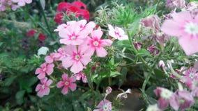 Rode en roze bloemen die aardfoto verbazen stock afbeeldingen