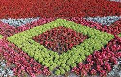 Rode en roze bloemen van Begonia op een bloembed Royalty-vrije Stock Foto