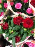 Rode en roze rozen op de markt stock afbeeldingen