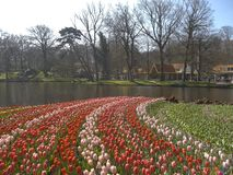 Rode en Roze Tulpen in Keukenhof Royalty-vrije Stock Afbeeldingen